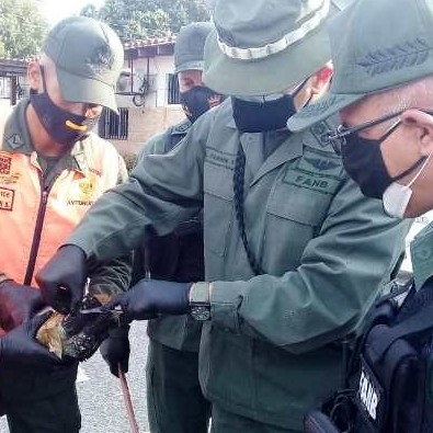 Diario Frontera, Frontera Digital,  GNB, Sucesos, ,DESTACAMENTO 222-GNB INCAUTÓ 192 PANELAS DE PRESUNTA DROGA