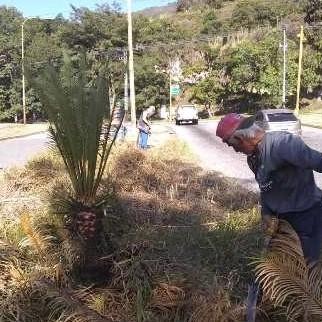 Diario Frontera, Frontera Digital,  ALCALDÍA DE MÉRIDA, Regionales, ,Alcaldía de Mérida continúa operativos de desmalezamiento y limpieza