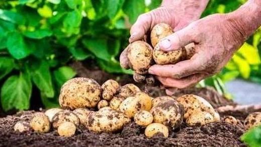 """http://fronteradigital.com.ve/""""Agroferia Móvil"""" atiende casa a casa a comunidades de Tabay"""