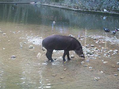 Diario Frontera, Frontera Digital,  CHORROS DE MILLA, Sucesos, ,Autoridades investigan muerte de un animal dentro del zoológico de Los Chorros