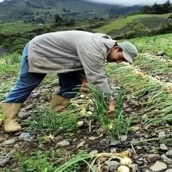 Diario Frontera, Frontera Digital,  TABAY, SANTOS MARQUINA, Páramo, ,Agroferia Móvil de Tabay impulsa la producción local de hortalizas