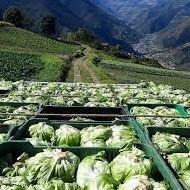 Diario Frontera, Frontera Digital,  PRODUCCIÓN AGRÍCOLA EN MÉRIDA, MÉRIDA, Regionales, ,Agricultores de Mérida temen perder producción por falta de gasolina