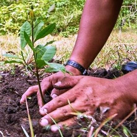 Diario Frontera, Frontera Digital,  EDUCACIÓN DELE STADO MÉRIDA, GOBIERNO DE MÉRIDA, Regionales, ,Junio será el mes de jornadas ambientales  en familia y desde casa