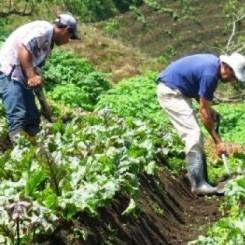 Diario Frontera, Frontera Digital,  MUNICIPIO SANTOS MARQUINA, Páramo, ,CLAP Agrícola atenderá instituciones educativas de Tabay