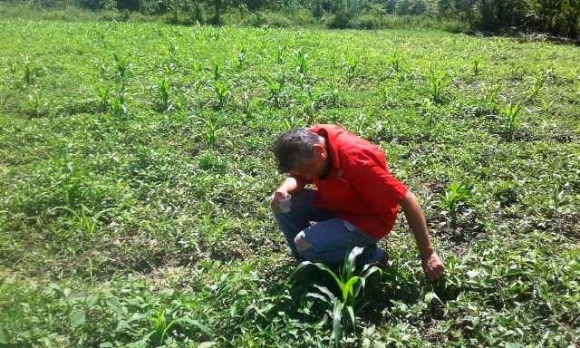 Diario Frontera, Frontera Digital,  Misión AgroVenezuela, Regionales, ,En Mérida sembrarán más de un millón 500 mil toneladas métricas de alimentos