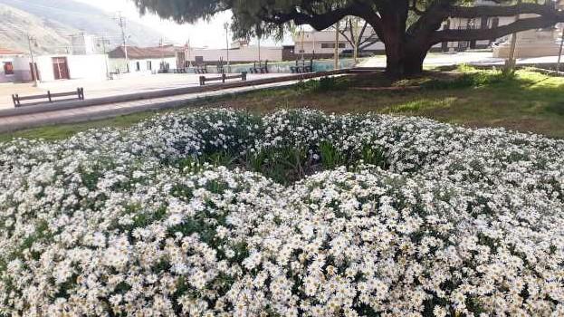http://fronteradigital.com.ve/Adornan plaza Bolívar de Mucuchíes  con siembra de plantas ornamentales