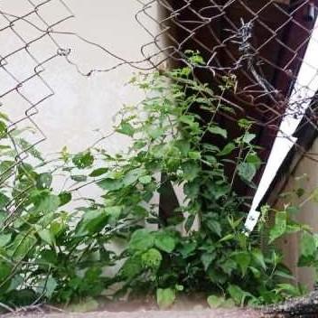 Diario Frontera, Frontera Digital,  HURTARON ESCUELA, Sucesos, ,Desconocidos hurtaron en la escuela Estadal Ofelia Trancredi Corredor  en La playita de El Vigía