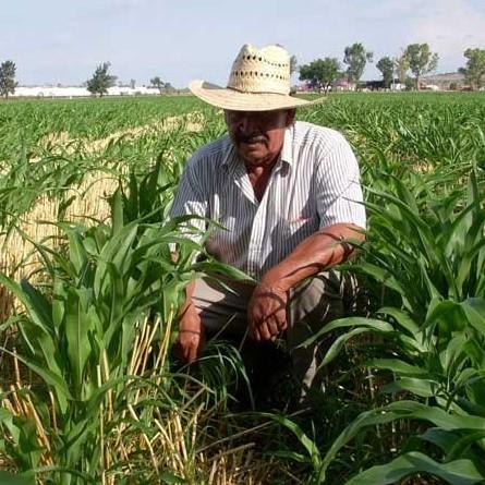 Diario Frontera, Frontera Digital,  AGRICULTORES, Nacionales, ,Agricultores alertan pérdidas de alimentos por falta de combustible