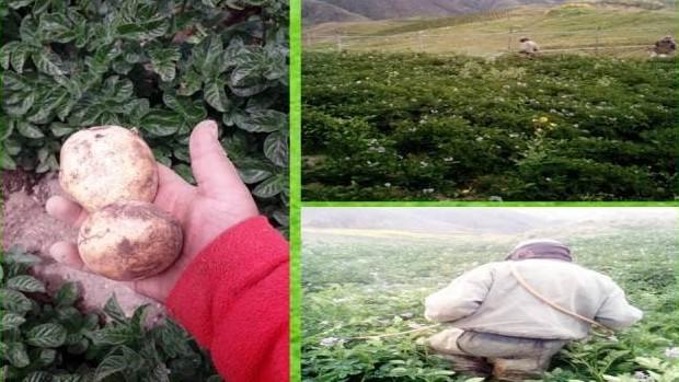 http://fronteradigital.com.ve/El CIDA sigue apostando a la producción de semillas soberanas de papa