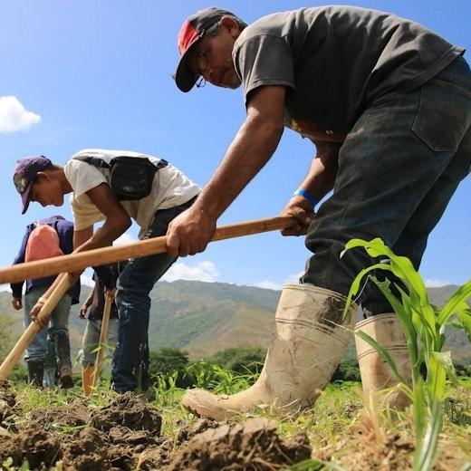 """Diario Frontera, Frontera Digital,  Frente en Defensa de los Productores Agropecuarios, Nacionales, ,*Frente en Defensa de los Productores Agropecuarios:  """"El campo venezolano sufre la peor crisis de su historia"""""""