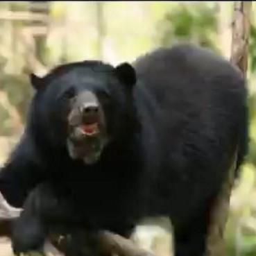 Diario Frontera, Frontera Digital,  CHORROS DE MILLA, Regionales, ,Parque Zoológico Chorros de Milla se prepara para recibir oseznos