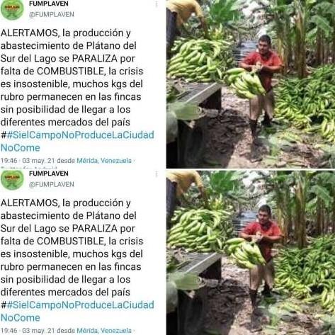 Diario Frontera, Frontera Digital,  plátanos, fumplaven, Panamericana, ,PARALIZAN PRODUCCIÓN Y ABASTECIMIENTO DE PLÁTANO  EN EL PAÍS POR FALTA DE COMBUSTIBLE
